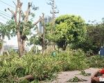 Hàng loạt cây xanh thành phố Vinh bị