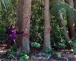 """Tỉnh ủy Bà Rịa - Vũng Tàu: Côn Đảo """"không được phép chặt bất cứ cây dầu nào"""""""