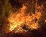 Rừng ở Hà Tĩnh, Nghệ An đang cháy đỏ trời trong đêm