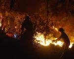 Thủ tướng yêu cầu không để lặp lại cháy rừng diện rộng như năm 2019