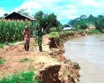 Ngăn Sông Cha sạt lở hàng chục km vì khai thác cát