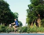 Hơn 100 cây cổ thụ ở Hà Nội bị bứng lên rồi... bỏ rơi