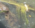Chú cá sấu