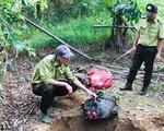Bò tót 200kg bị lâm tặc hạ sát trong Vườn quốc gia Cát Tiên