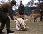 Chó phát hiện được người nhiễm COVID-19