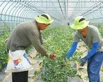 Hàn Quốc tìm cách gia hạn thị thực cho lao động nước ngoài