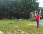 Qua rà soát phát hiện Nghệ An có hơn 11.400 vụ cấp đất trái thẩm quyền