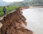 Thêm 40 tỉ đồng vá sông Krông Nô đang sạt lở trầm trọng