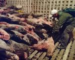 Ngoại trưởng Mỹ: Trung Quốc ngừng ngay kiểu đánh cá tận diệt, phá hủy môi trường