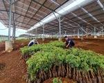 Lúng túng với điện mặt trời nông nghiệp