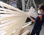 Hạt điều và ngành gỗ
