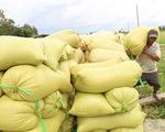 Còn nhiều chuyện phải làm cho chất lượng hạt gạo Việt