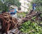 Bão số 5: Huế chịu vết thương lớn với 15.000 cây xanh ngã đổ