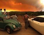 Cháy rừng lịch sử làm đổi hương vị nho California