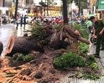 Bị cây xanh ngã đè: Ai chịu trách nhiệm?