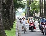 Cây xanh ngã đè người đi đường: Đã đến lúc cho cây lâu năm
