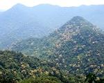 Trên đỉnh núi thiêng Bạch Mã - Kỳ 4: Lạc vào đại ngàn kỳ hoa dị thảo