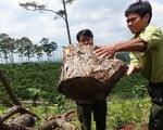 Lâm Đồng: Toàn bộ lãnh đạo một hạt kiểm lâm bị điều chuyển để điều tra phá rừng