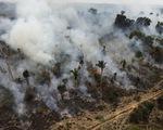 CO2 càng nhiều, cây xanh càng chết sớm