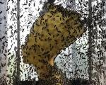 60.000 chú ong thợ tạo nên tượng nữ hoàng Ai Cập bằng sáp
