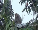 Người dân TP.HCM nơi đàn khỉ