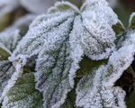 Nhiệt độ xuống -2 độ C, băng giá phủ trắng đỉnh Phja Oắc, Cao Bằng
