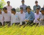 Kỹ sư Hồ Quang Cua trải lòng với Bộ trưởng NN-PTNT chuyện gạo ST25 rớt hạng