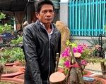 Cưa trộm hàng chục cây hoa giấy trang trí của thành phố đem về ươm bán