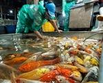 Khan hàng, cá chép tăng giá gấp ba trong ngày cúng ông Công, ông Táo