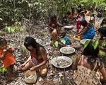 Cuộc chiến phủ lại rừng xanh - Kỳ 5: Những hạt giống