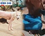 Lăng kính 24g: Phạt tiền khi hành hạ vật nuôi nhằm chấm dứt những video tàn nhẫn