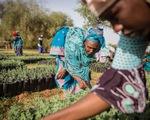 Con người đấu sa mạc: Giành lại 100 triệu hecta đất