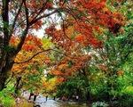 Suối Tà Má rực rỡ hoa trang rừng