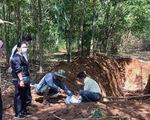 """138 con heo chết bị lén """"đắp mộ"""" dài 20m trong rừng cao su"""