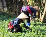 ILO: Tỉ lệ phụ nữ Việt tham gia lao động hơn 70%, toàn cầu dưới 50#phantram