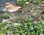 Cá chết nổi trắng lòng hồ, bốc mùi nồng nặc giữa thành phố Tam Kỳ