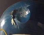 Con chim nhỏ, mềm sao gây 'thương tích' cho máy bay?