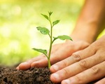 Bệnh nhân Ấn Độ lành COVID được khuyên trồng cây trả lại oxy cho tự nhiên