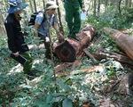 Khởi tố 37 người tham gia phá rừng giáp ranh Đắk Lắk - Phú Yên