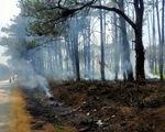 Hết khoan gốc hạ độc lại đốt phá rừng thông