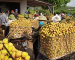 Bắc Giang thành lập 2 tổ hỗ trợ xuất khẩu vải thiều tại cửa khẩu
