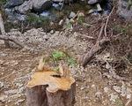Phá rừng phòng hộ làm đường thi công thủy điện