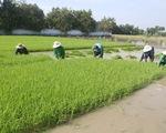 Ông Hồ Quang Cua: Muốn nhượng bản quyền gạo ST25 cho Nhà nước với giá