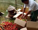Lâm Đồng tặng 350 tấn rau củ quả cho TP.HCM và các tỉnh