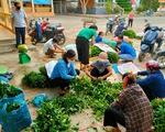 Gom rau từ vườn nhà góp từng xe gửi vùng cách ly