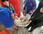 Ông Hun Sen cho phép trả sư tử cho chủ ở Phnom Penh