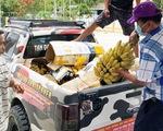 Đội xe bán tải hỗ trợ chở rau củ quả
