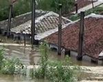 Lũ tàn phá hơn 1.100 ngôi nhà ở Triều Tiên, nỗi lo mất mùa hiển hiện
