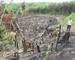 Khởi tố vụ án phá rừng phòng hộ ở Phú Yên mà báo Tuổi Trẻ phản ánh