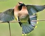 Chim di cư ngủ hàng trăm giấc/1 ngày